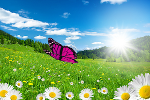 CSS 3D Butterfly